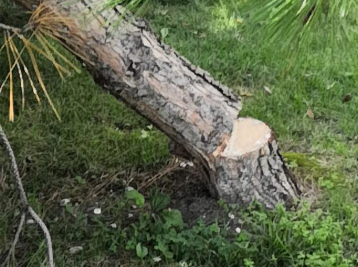 В центре Туапсе повреждены три дерева