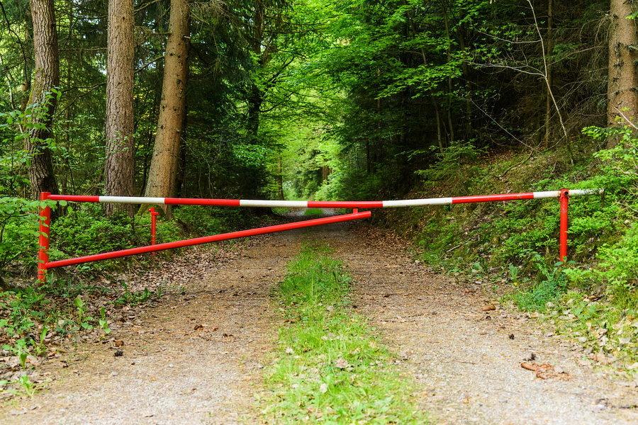Запрет на посещение лесов в Краснодарском крае продлили до 27 августа
