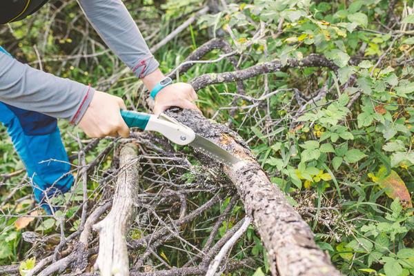 О заготовке древесины