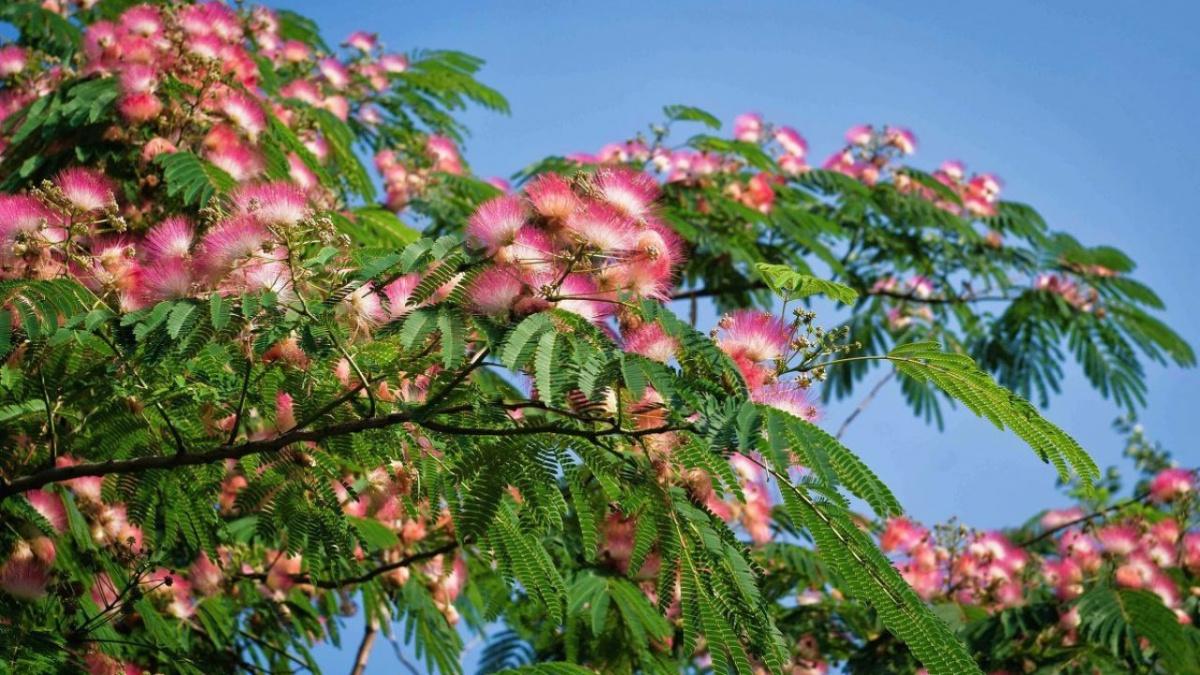 В Туапсе высадят новые деревья и кустарники