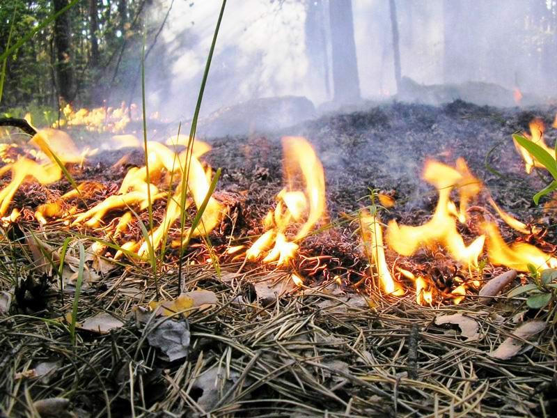 Меры безопасности в период особого противопожарного режима обсудили на заседании КЧС