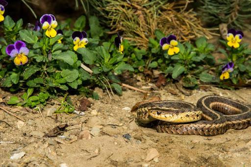 Осторожно, змеи