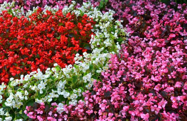 Высадка цветов в Туапсе