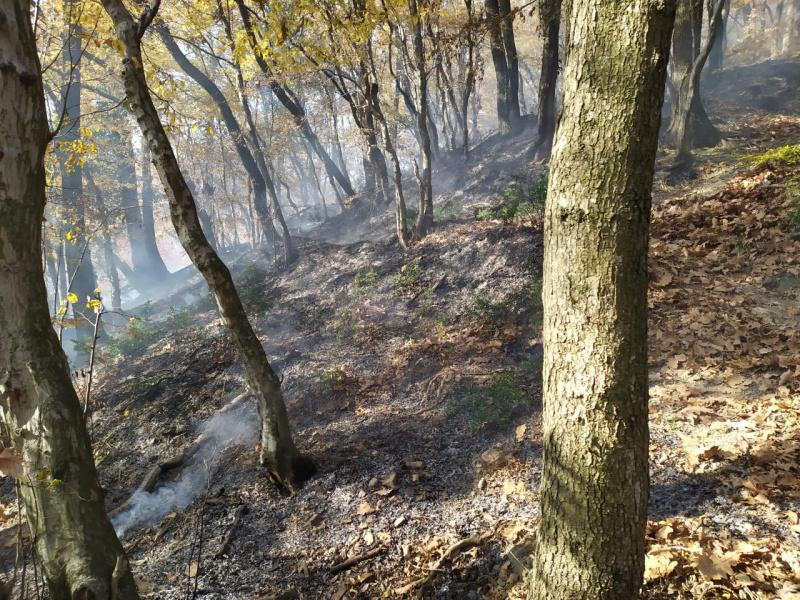 Природные пожары: правила  поведения  при возникновении ЧС