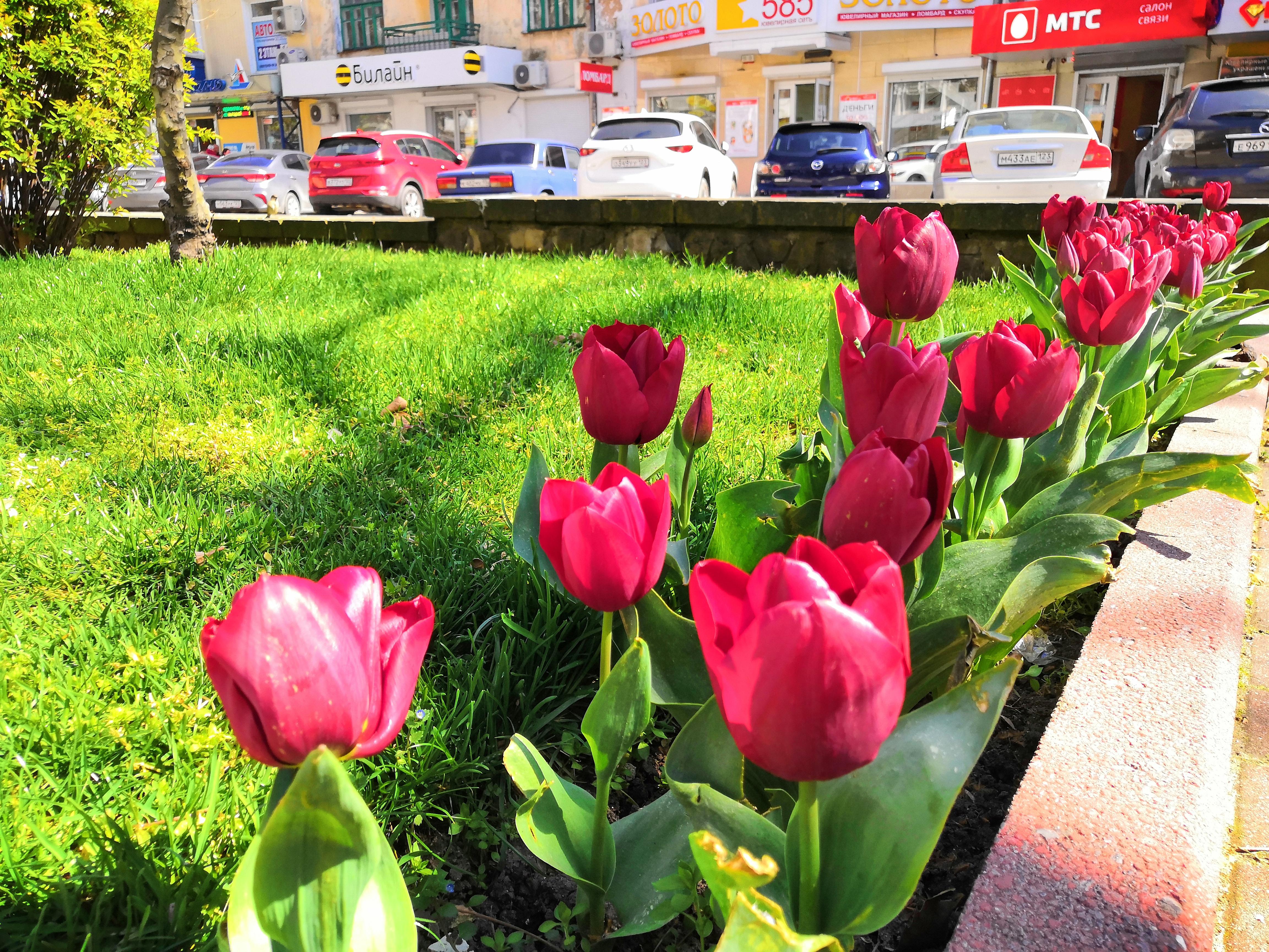 В Туапсе высаживают зимние и весенние цветы