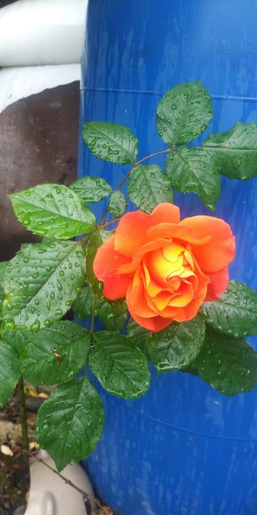 Цветы жителей улицы Ключевая