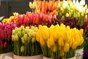 Цветы – к празднику